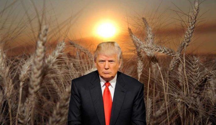 ABD Dünya Ticaret Örgütü'nde Çin'e Karşı Tahıl İthalatı Kotaları Davasını Kazandı