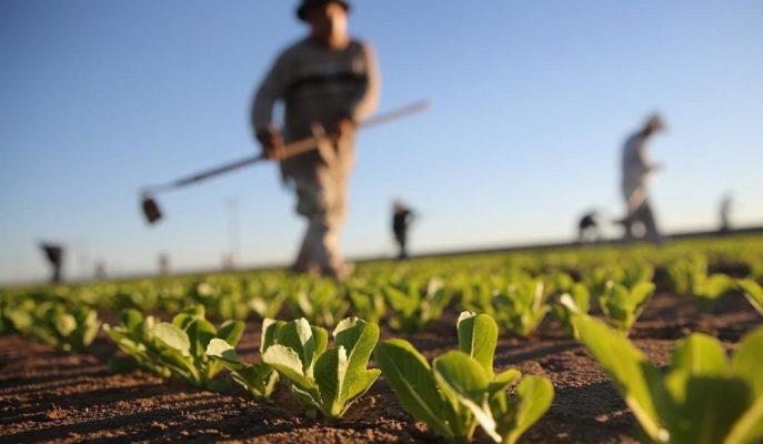 Çiftçinin Finansman Sorununun Çözümü için Kredi Faiz Oranları Düşürülmeli