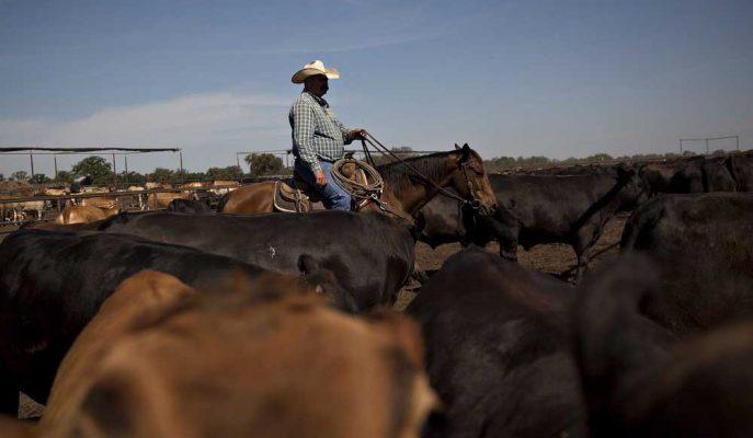 Çin'in Yeni Tarifeleri ABD'li Çiftçileri Her Açıdan Vuracak