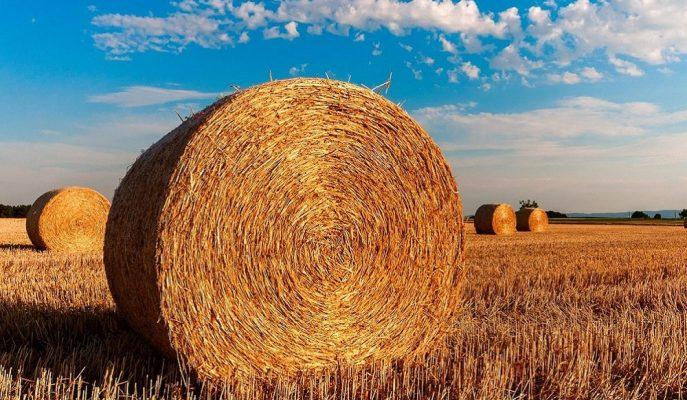 Tarım ve Orman Bakanlığı Üreticiye 60 Milyon Euro'luk Yeni Hibe Açıkladı