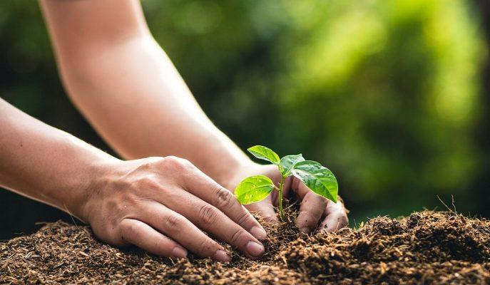 2030 Yılına Kadar 1,5 Milyon Hektar Alanda Ağaçlandırma Yapılması Hedefleniyor