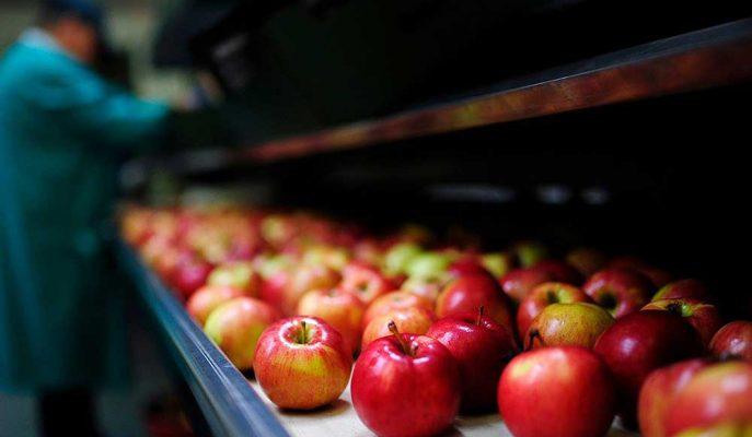 Çin'de Elma Fiyatlarının Yükselmesi Hükümeti Endişelendiriyor