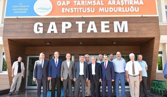 """GAPTAEM Tarafından Geliştirilen Yeni Arpa Çeşidi """"Ayhan"""" Yüksek Verim Garantisi Verdi"""