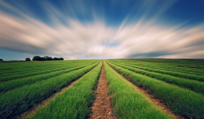 Hazine'ye Ait Tarım Arazilerinin Satışı için Başvurular Yıl Sonuna Uzatıldı