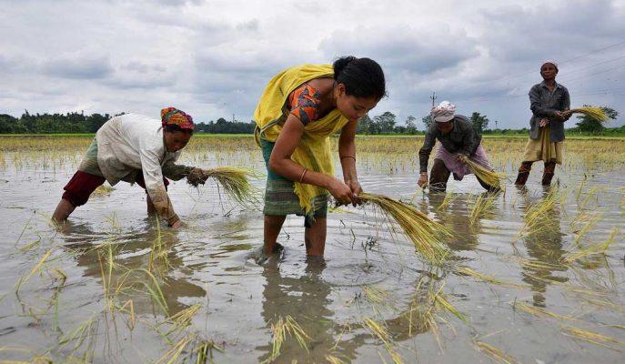 Hindistan Ekonomik Yavaşlamasını Durdurmak için Büyük Yağışlara İhtiyaç Duyabilir