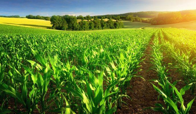 Tarım Ürünleri ÜFE'si Haziran'da %2,97 Oranında Düşüş Gösterdi