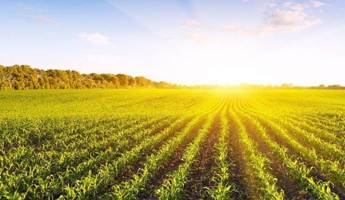 Tarımda Uzmanlığa Teşvik Amacıyla 100 Bin Liralık Hibe Desteği Sağlanacak