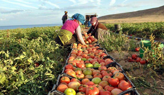 TCMB: TÜFE'de Yavaşlamanın Ana Belirleyicisi İşlenmemiş Gıda