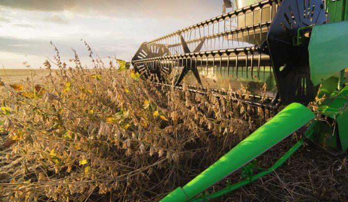 ABD'li Soya Fasulyesi Çiftçileri, Çin Sonrası Yeni Pazarlar Arıyorlar