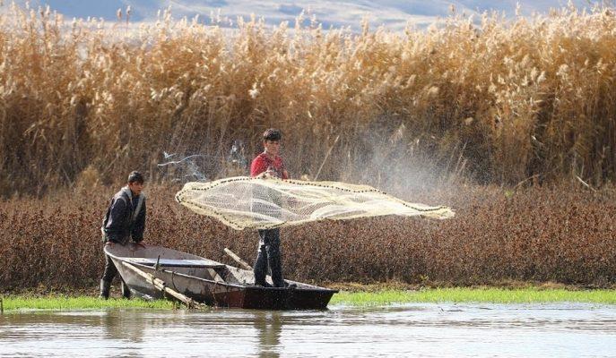 Barajlardaki Su Ürünlerinden Yıllık Ortalama 940 Milyon Lira Getiri Sağlanıyor