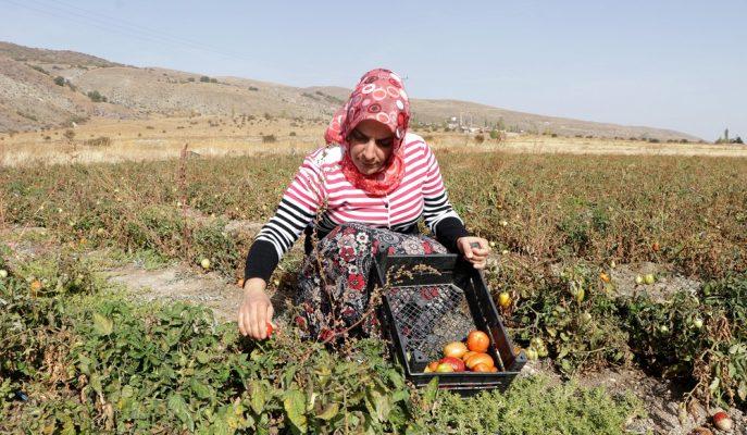 2019'da Bakanlık Tarafından 77 Bin Kadın Çiftçiye Eğitim Verildi
