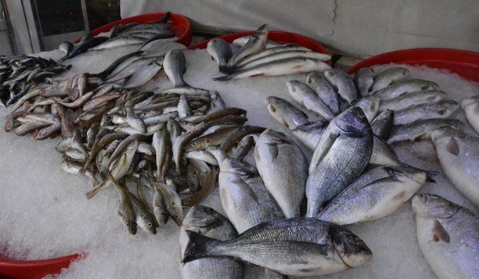 Küresel Isınma Balık Sayısını ve Türlerini Azaltırken, Bu Durum Fiyatlara Yansıdı