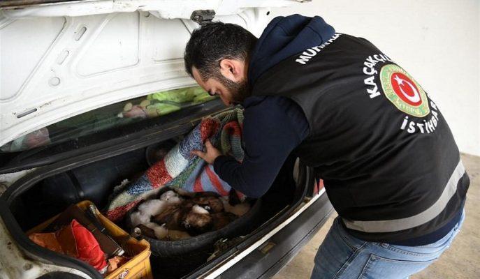 Kaçakçılığın Önlenmesi Amacıyla Gümrüklerden Geçen Araçlara Yapay Zeka Taraması Geliyor