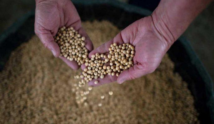 Çin'in ABD Soya Fasulyesi İthalatı Kasım'da Arttı
