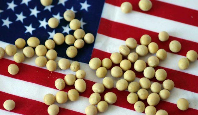 Çin'in Eylül-Kasım Arasındaki ABD Soya Fasulyesi Alımı Geçen Yıla Kıyasla 13 Kat Arttı
