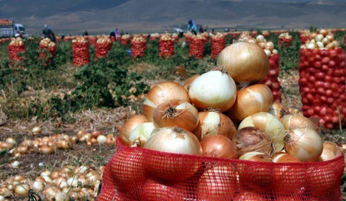 Hindistan'ın Soğan Krizi, Türkiye'den 1,5 Ayda 50 Bin Tonluk İhracat Sağladı