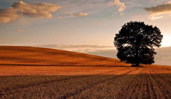 Hazine'ye Ait Tarım Arazilerinin Satışında Son Başvuru 16 Aralık!