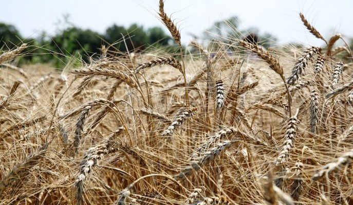2019'da En Çok İthal Edilen Ürünlerin Başında Buğday Yer Aldı