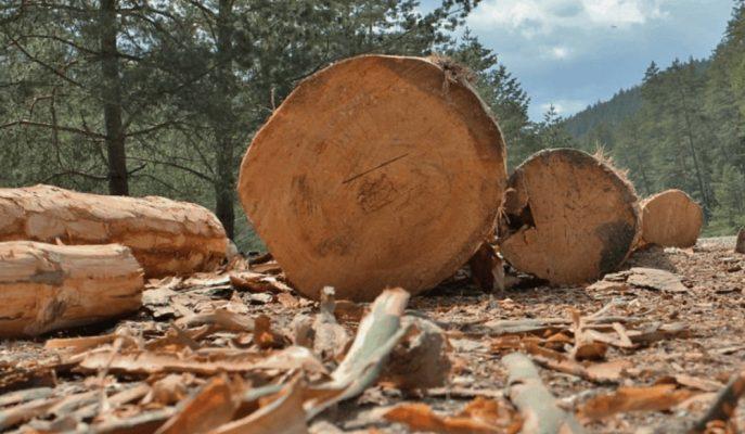 Mobilya, Kağıt, Orman Ürünleri Sektörü 2019 İhracatından 5,5 Milyar Dolar Kazandı