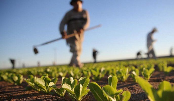 Tarım-ÜFE 2019'un Son Ayında %2,17 Oranında Artış Gösterdi