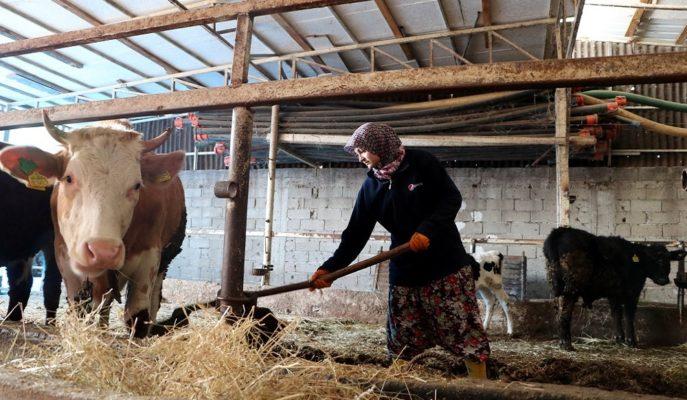 2003'ten Bu Yana Dağıtılan Hayvancılık Desteği 33 Milyar Liraya Ulaştı