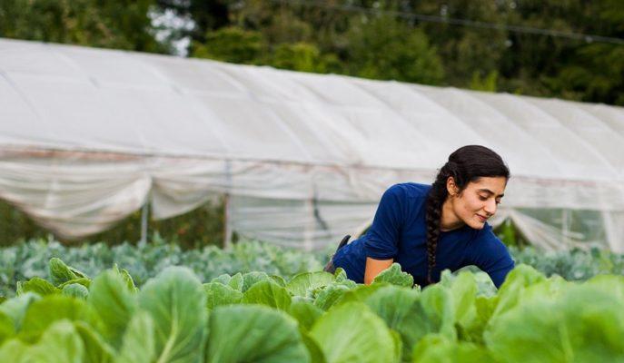 1,9 Milyar Liralık Destek Ödemesi 27 Mart İtibarıyla Çiftçilerin Hesaplarına Yatırılacak