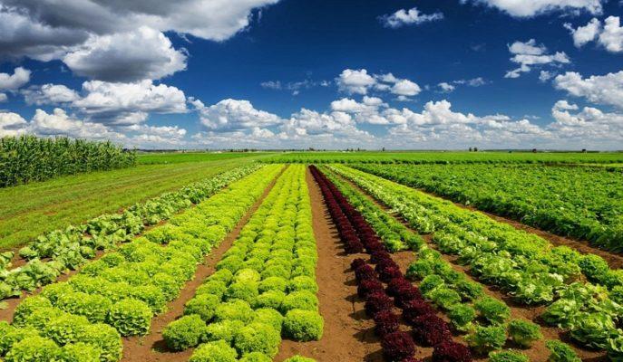 Tarımsal Girdi Fiyat Endeksi Ocak'ta Aylık %1,10 Artış Gösterdi
