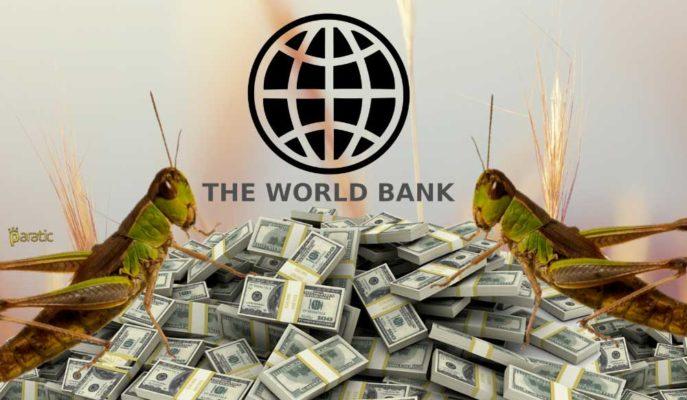 Dünya Bankası Çekirge İstilasına Karşı Büyük Bir Destek Paketi Hazırlıyor
