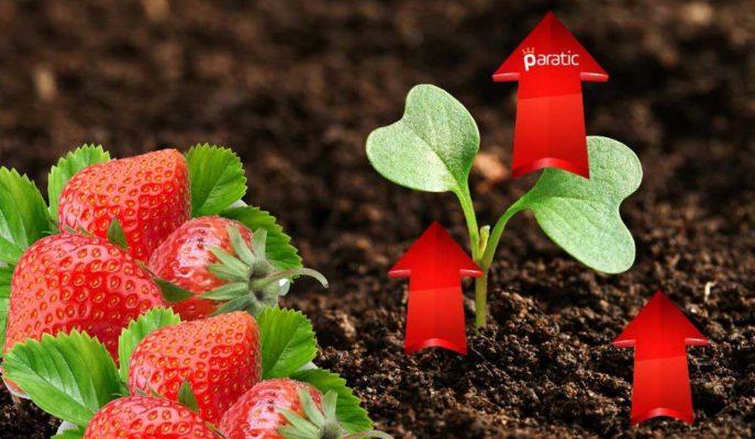 Tarım-ÜFE Mayıs'ta Artarken, En Çok Zamlanan %12,39 ile Çilek Oldu