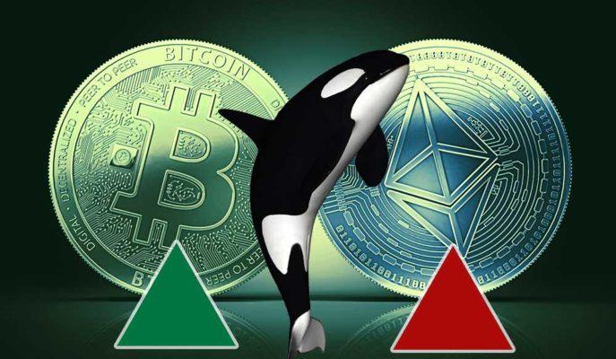 Bitcoin ve Ethereum Balinaları Yeni Bir Ralli için Hazırlanıyor