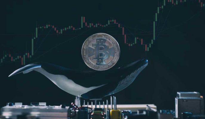 100 ila 1000 Arası Bitcoin Bulunan Cüzdanların Sayısı Artmaya Devam Ediyor