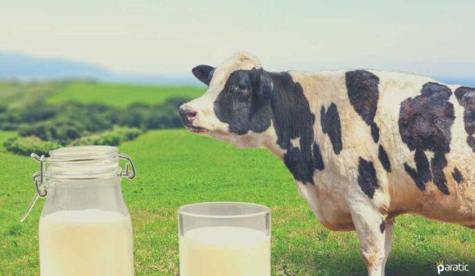 Nisan'da Türkiye Genelinde Toplanan Süt Miktarı %1,8 Arttı