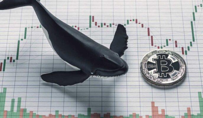 Balinaların Bitcoin Varlıkları Tüm Zamanların En Yükseğine Ulaştı