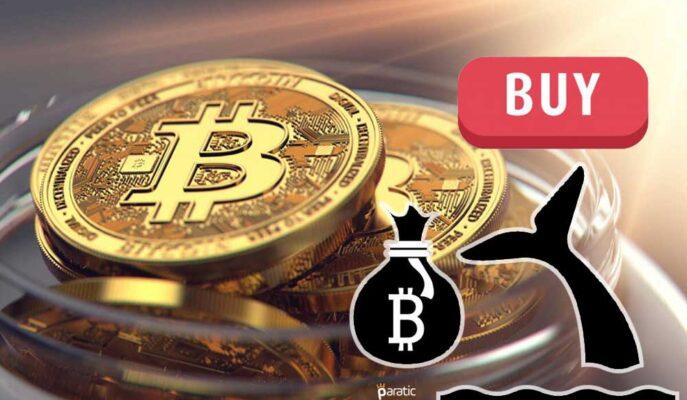 Bitcoin Balinaları Son 4 Günde 50 Bin BTC Alımı Yaptı